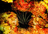 IMG_4111 urchin 5x7
