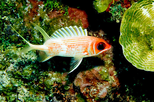 Roatan Dive 2014