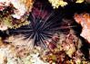 IMG_4148 urchin as 5x7