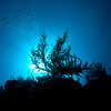 Backlit Gorgonian