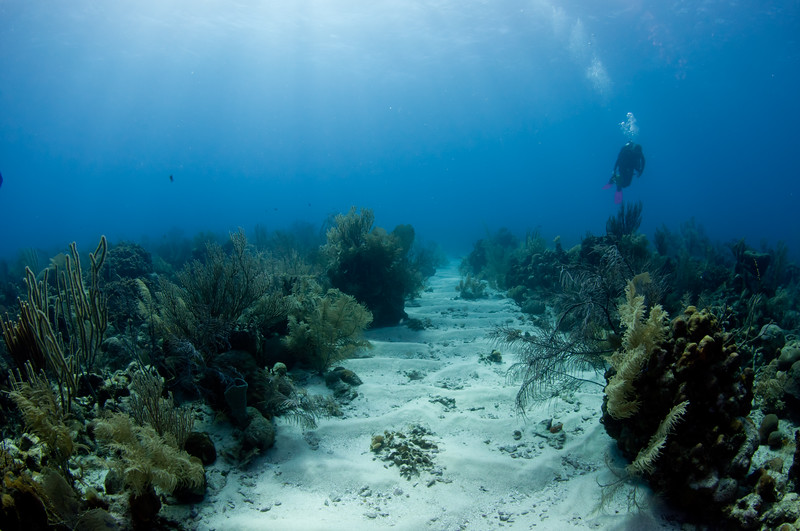 Spur and Groove Reef Formation