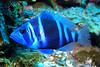 SCUBA 022204AM1 - 5<br /> Honduras_Roatan - Inside Out Reef 022204AM1