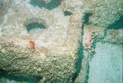 This is another fireworm inside the wreck.  It is a little harder to see, but is just right of the rust colored object on the cinder block.  Again, this was off the Florida coast near Pompano Beach.