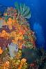 Coral Head
