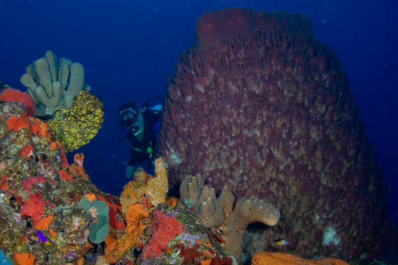 Giant Barrel Sponge and Larry