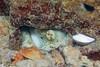 Octopus Hiding