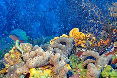 Black Coral.