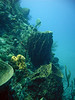 Nice Barrel Sponges