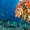 04-reef 2