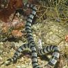 2-snake