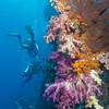 01-reef 1