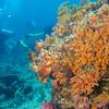34-reef 7