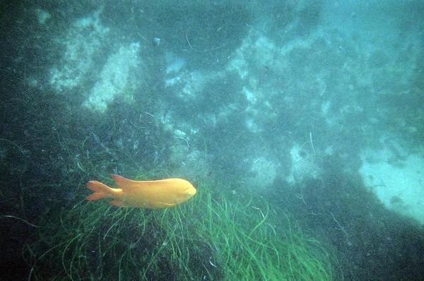 Sara's dive pix La Jolla 2005
