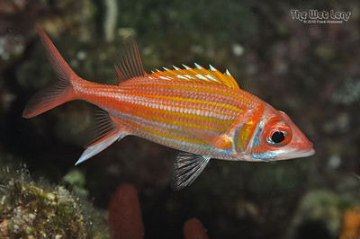 Aug 2016 - Fish ID Photos