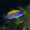 Sunshinefish