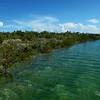 Mangrove in the Creek