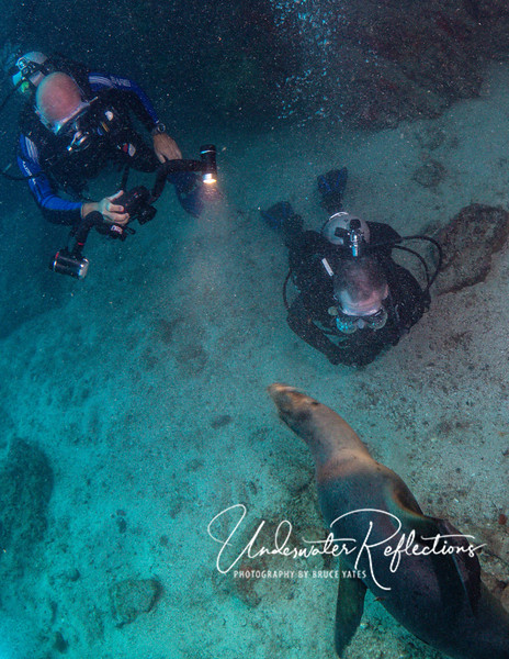 An indication of their curiosity and lack of fear of humans (at least divers), this adult's face is within a foot of Luke's face, as it seems intrigued by Larry's focus light.