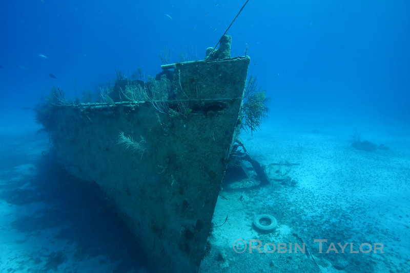 "The ""Tears of Allah"" wreck.  One of the James Bond Wrecks, this one was used in the film ""Never Say Never Again,"" when Sean Connery swam through a torpedo-hole while being pursued by a tiger shark."