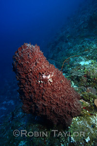 This sponge is as tall as I am, deep along the wall.