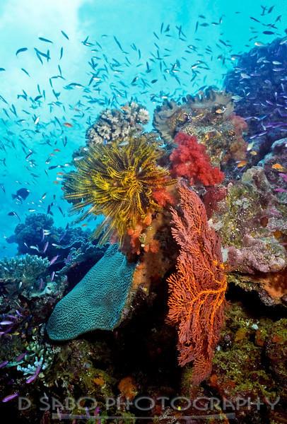 """""""Astrolabe Reef""""  Colorful Fijian shallow reefscape at Astrolabe Reef near Kadavu, Fiji."""