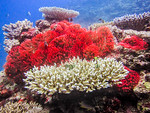 Seascapes : These images were shot while scuba diving in marine parks of Little Cayman, Curaçao, and Statia islands, and Fiji  with Canon Powershot compacts A80, A710, s90 and S100 in Canon UW housings without any artificial light (strobes or flash). To learn more go to  my Blog.