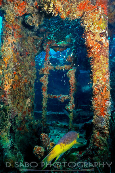 """Wreck of the Purini""  The ""Purini"" was a WWI minesweeper that sunk off the coast of Mayreau, St. Vincent and the Grenadines, Windward Isles in 1918.  Now a living shipreef, beautiful corals and sponges adhere to the ladders as a Spainish Hogfish cruises by."