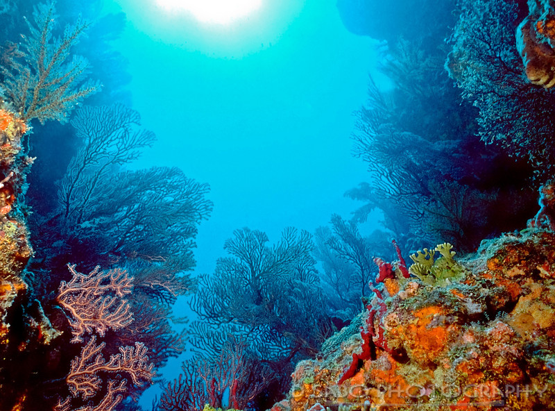"""""""Bequia Grotto""""  Color is not just reserved for South Pacific coral reefs.  This colorful dive site encompassing red gorgonians and orange encrusting sponges in Admiralty Bay, Bequia, St. Vincent and the Grenadines proves it."""