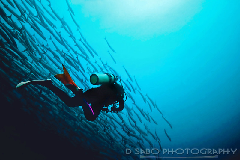 """""""Us and Them""""  Solitaire female diver glides along with a massive school of barracuda at Mary's Place, Russell Island chain, Solomon Islands"""