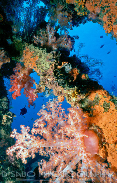 """""""Wreck of Ruinui Solomons""""  Fantastic shipwreck that is now a living shipreef.  This dive is done as a shore dive off of Honiara, Solmon Islands."""