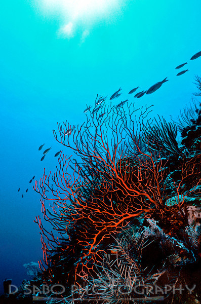 """I spy something red""   Simple lines, a dominant color and a sense of beauty elegantly portrayed by our underwater world.  Shot off of Turneffe Atoll, Belize, C.A."