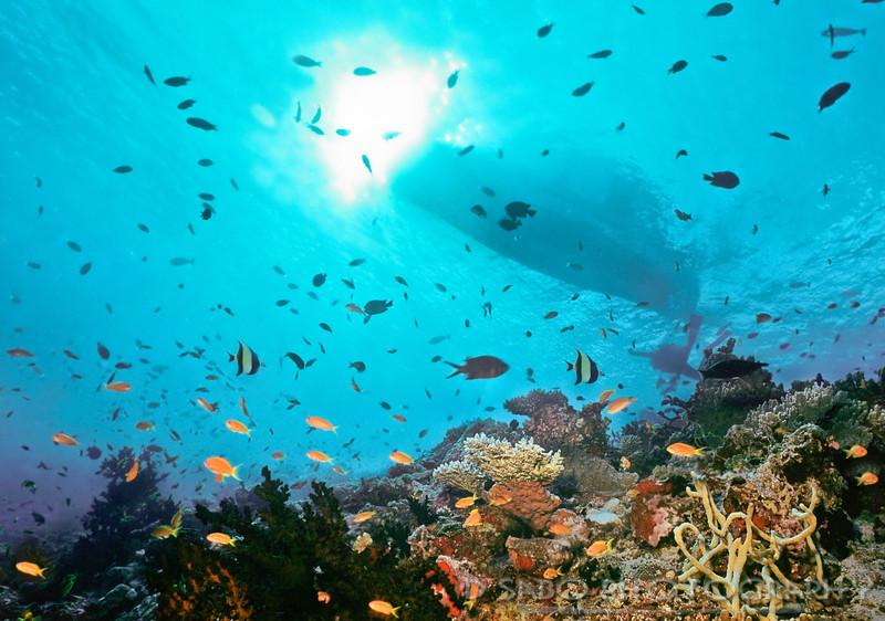 """School's In""    Very busy shallow reef near Felidu Atoll in the Maldive islands"