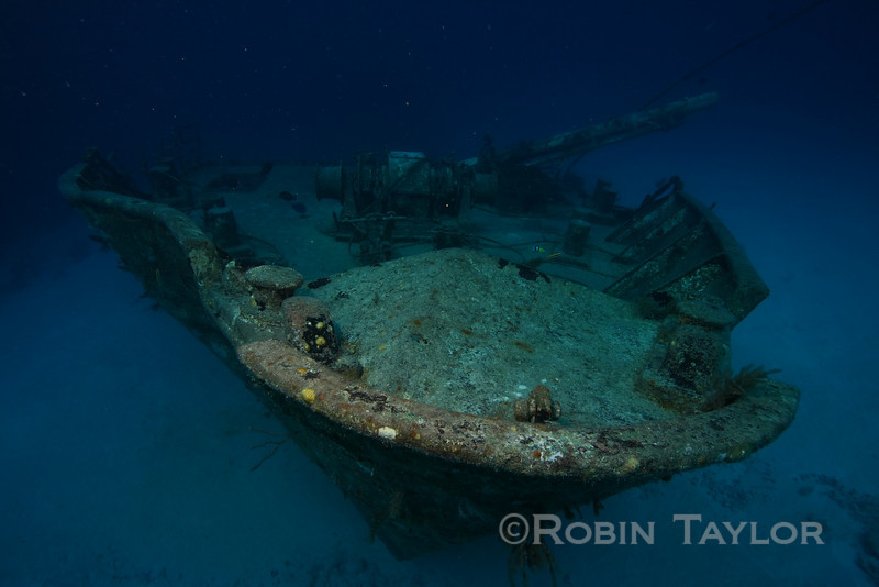 "The bow of the ""Ray of Hope"" a freighter wreck that is sometimes the site for our shark feeds."