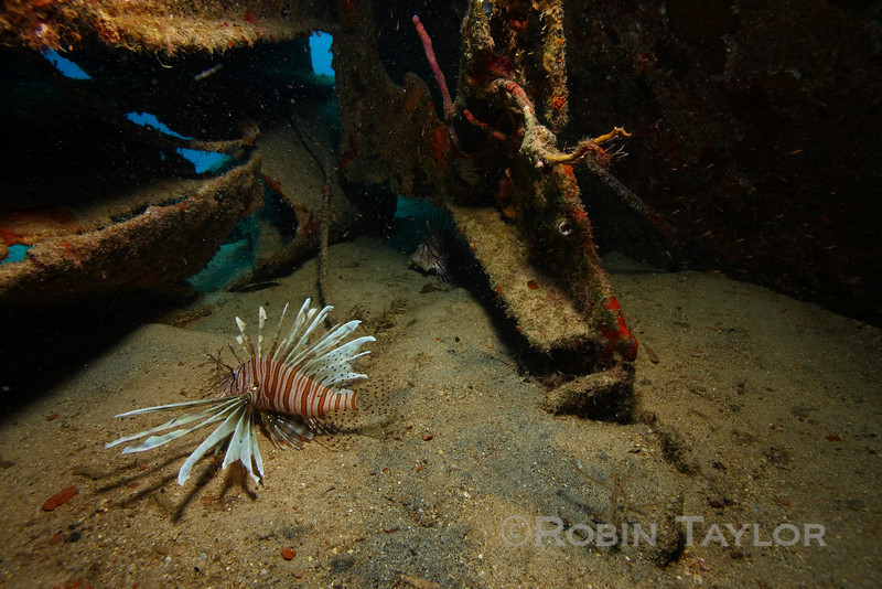 "A couple lionfish hiding underneath the ""Bahama Mamma"" wreck."