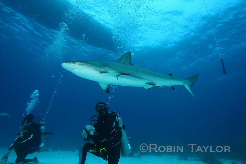 Shark cruises past Aurelien, one of our staff instructors on his day off.