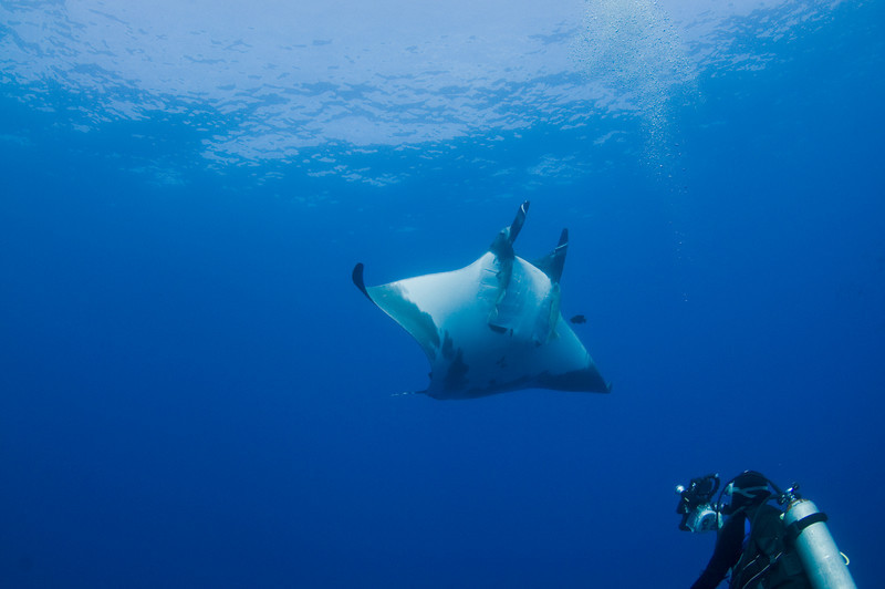 Paul Capturing the Giant Manta on Video