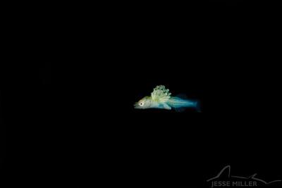 Unknown Fish - Sekiu Jetty in Sekiu, Washington