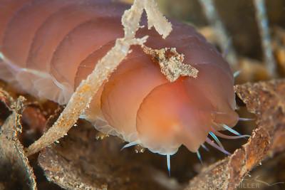 Scaleworm - Redondo in Des Moines, Washington