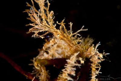 Crab - Three Tree North in Burien, Washington