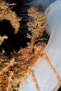 Crab - Sund Rock in Hoodsport, Washington