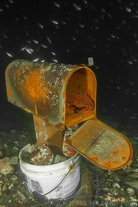 Crab in Mailbox - Redondo in Des Moines, Washington