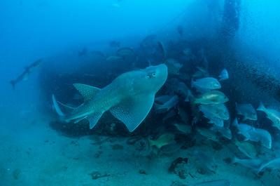 Shipwrecks of FNQ
