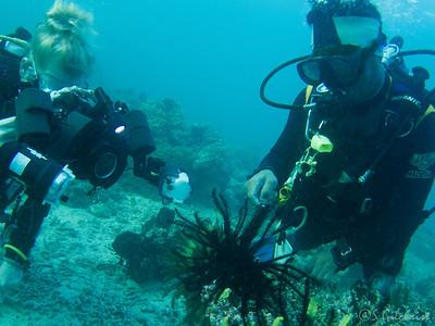 Crinoid shrimp, Bangka Island, North Sulawesi
