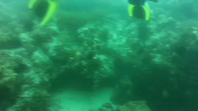 Short Underwater Videos