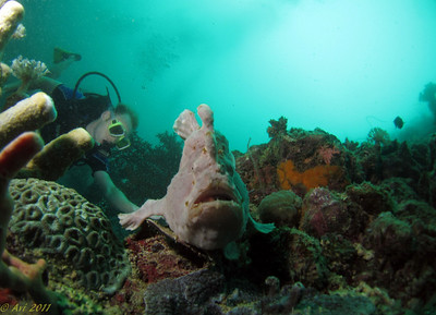 Frog fish at Si Amil and Tom