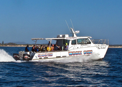 """Kraken"", a fast and comfortable purpose-built dive boat 0266 497 100 ."