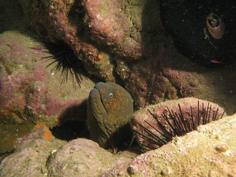 Moray Eel, San Clemente Island - May 2010