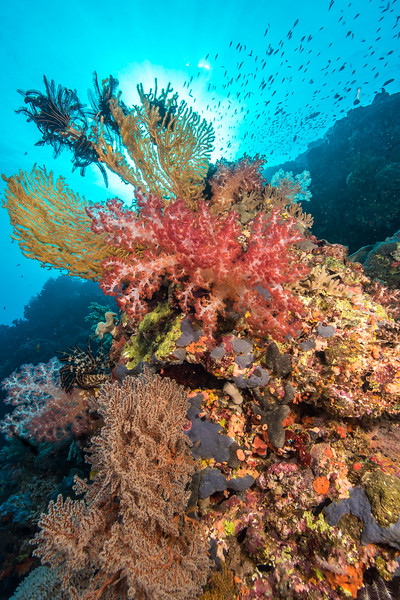 Soft Coral Reefscape