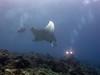 Manta meets diver.