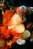 Christmas tree worms