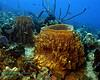Barrel Sponges